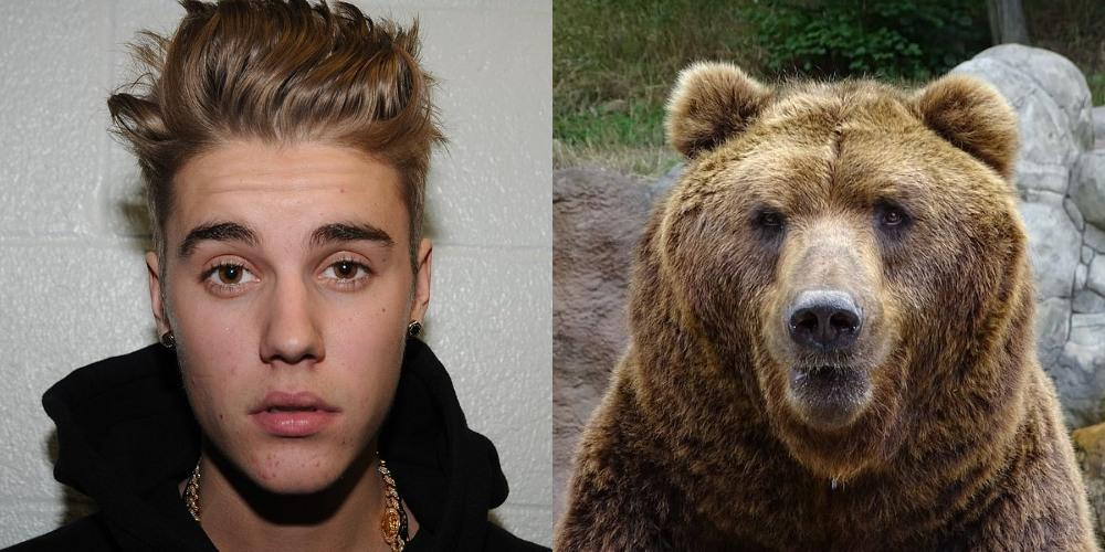 Justin Bieber vs Grizzly Bear
