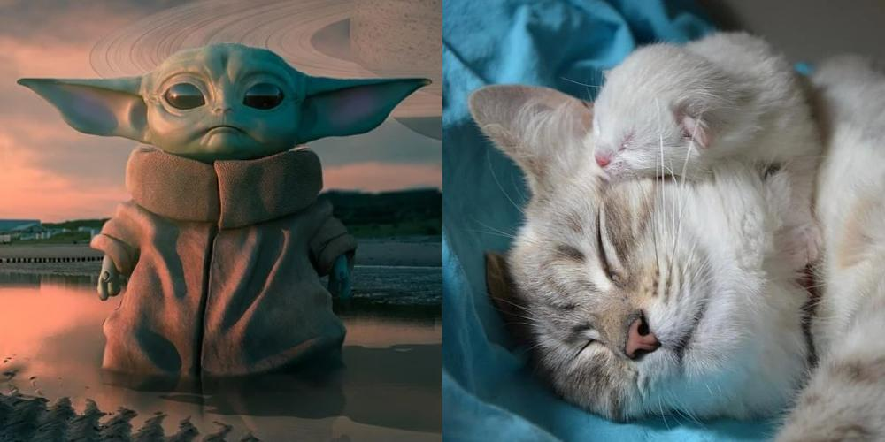 Baby Yoda vs a Kitten